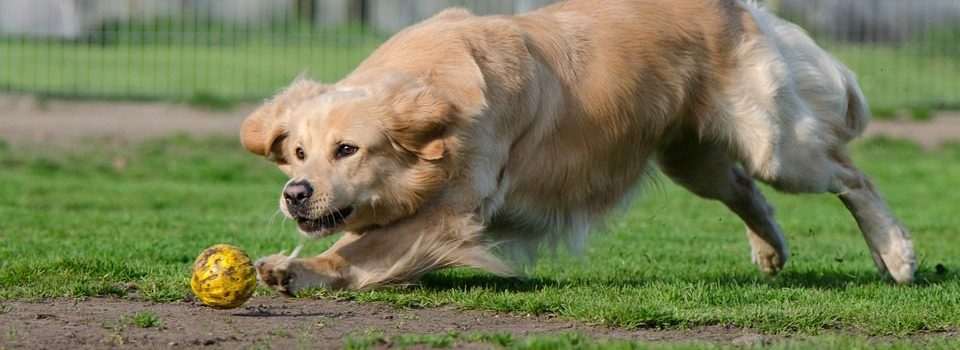 Which Dog Kennels Are The Best? - Post Thumbnail